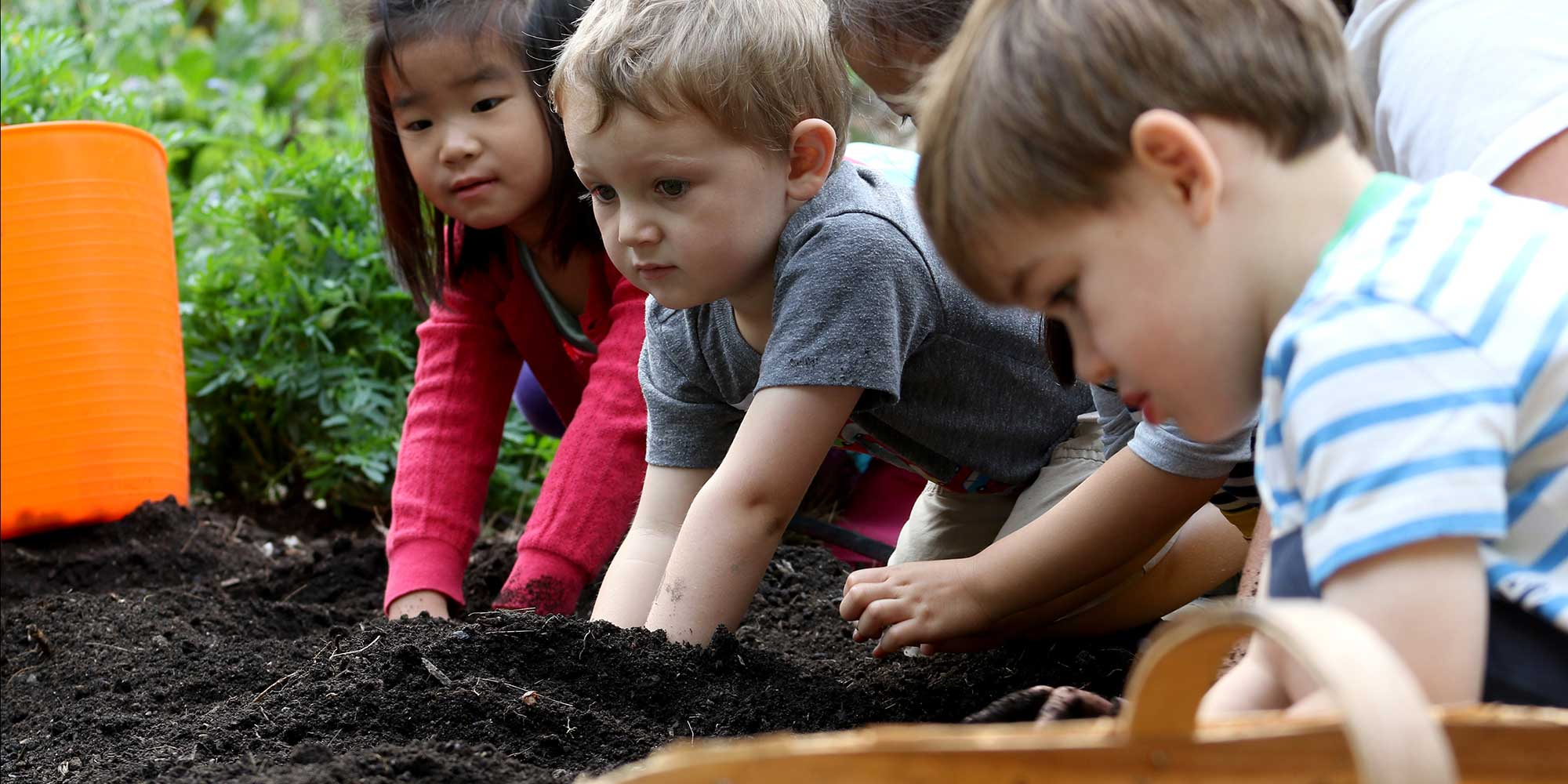 Pre-k students dig in the garden