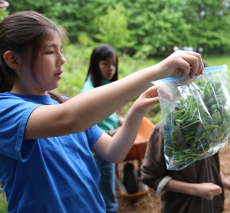 Students harvest and bag greens for Rosie's Place